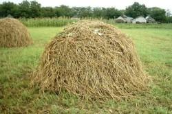 Некачественное сено