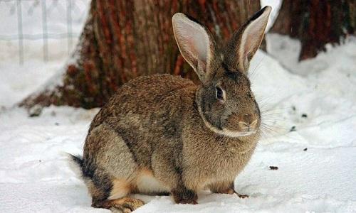 Особенности содержания и ухода за кроликами