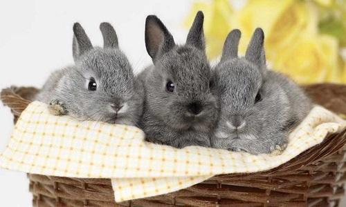 Многочисленные породы кроликов