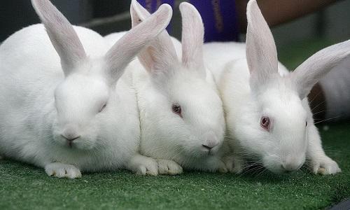 Красивые кролики