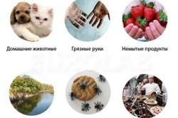 Источники заражения глистами
