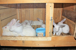 Комфортное гнездо для кроликов