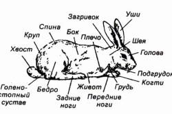 Строение кролика