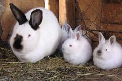 Кроличье семейство