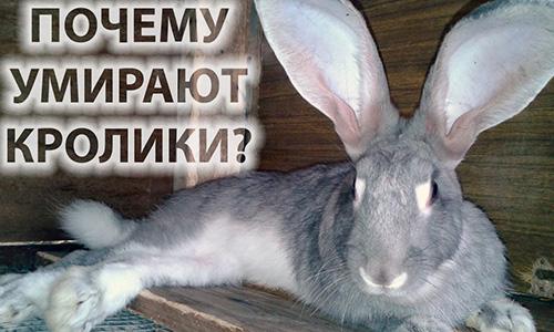 Поражение кроликов кокцидиозом