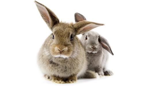 Заболевания печени у кроликов