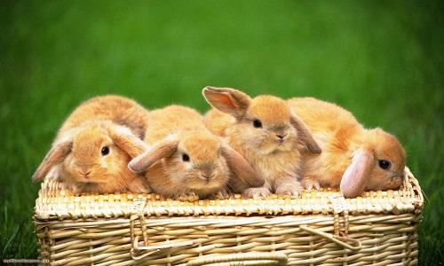 Проблема поноса у кроликов