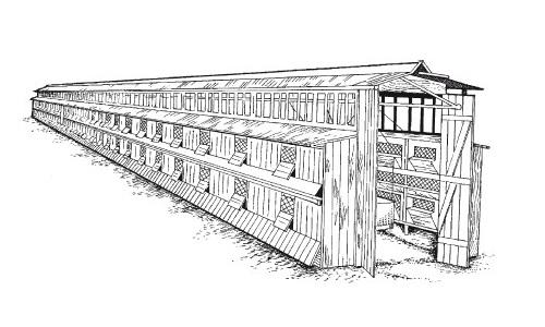 Внешний вид деревянного шеда для кроликов