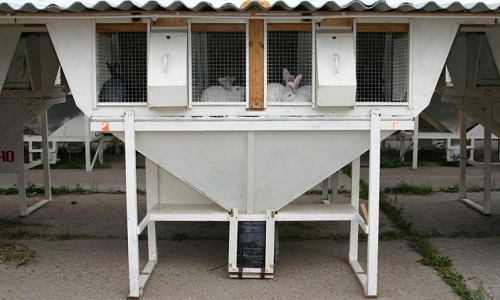 Способы сооружения мини фермы для кроликов