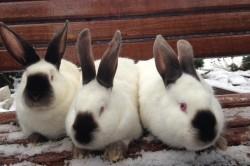 Уютная атмосфера для крольчих