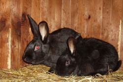 Размеры кролика