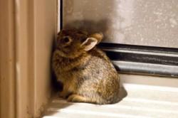 Характер кролика