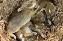 Потомство зайцев
