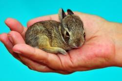 Проблема стоматита у крольчонка
