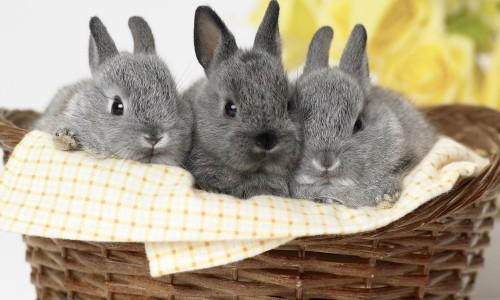 Милые декоративные кролики