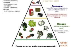 Пирамида питания декоративных кроликов
