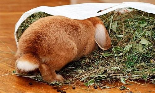 Правильное питание кролика