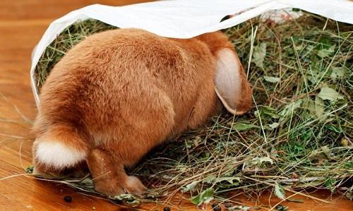 Кормление кроликов сеном