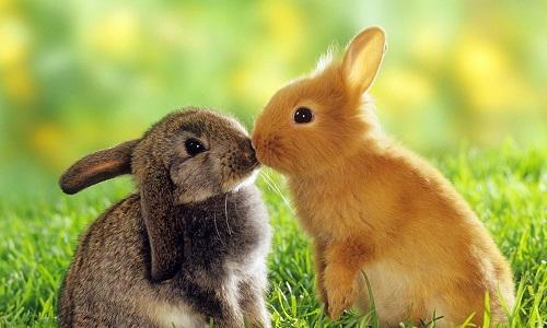 Условия для кроликов