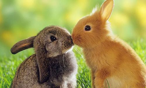 Разноцветные декоративные кролики