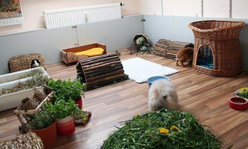 Пример оформления пространства для декоративных кроликов