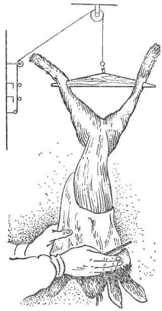Приспособление для забоя кроликов сделать своими руками 15