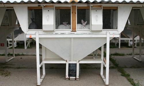 Михайловские фермы для кроликов своими руками