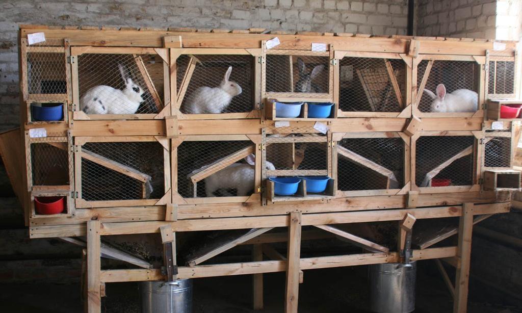 Что сыпать кроликам в клетку 183