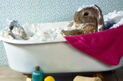 Необходимость купания кролика