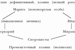 Схема фасциолеза