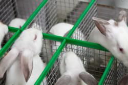 Кролики в тесных клетках