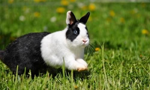 Проблема запора у кролика