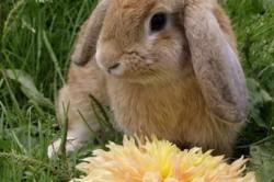 Отсутствие аппетита у кроликов - симптом возникновения запора