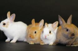 Испуганные кролики