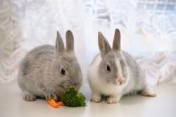 Необходимость прогулок для кроликов
