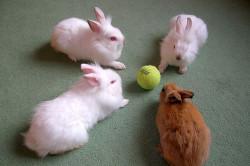 Цветные декоративные кролики в игре